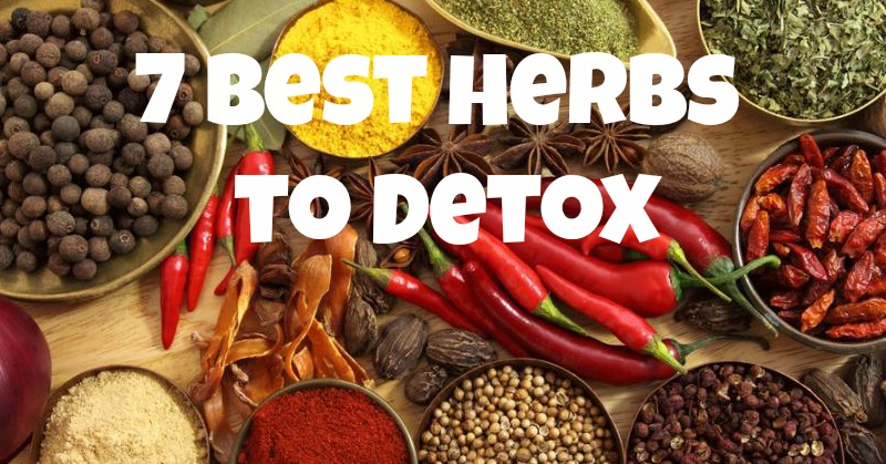 7 Best Herbs to Detox