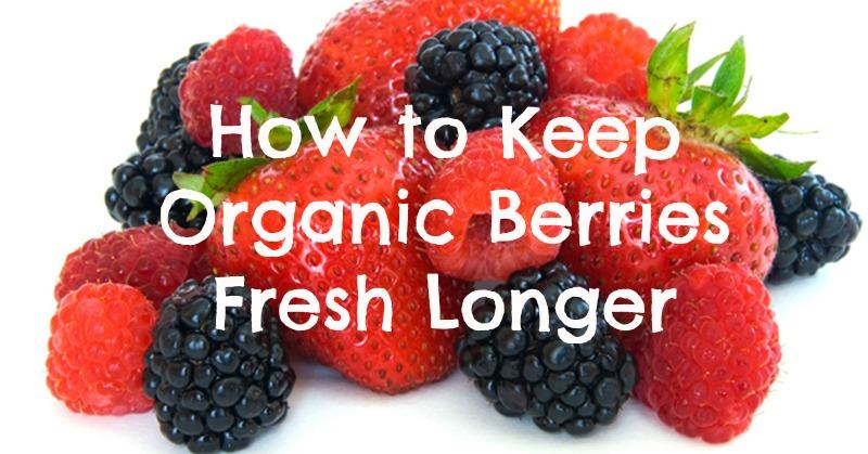 How to Keep Organic Berries Fresh Longer