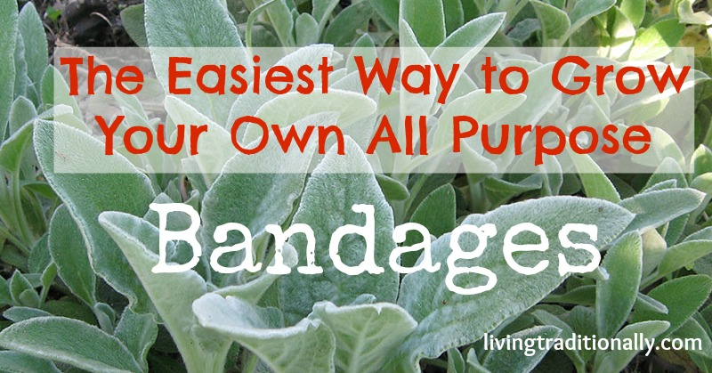The Easiest Way to Grow Your Own All Purpose Bandages