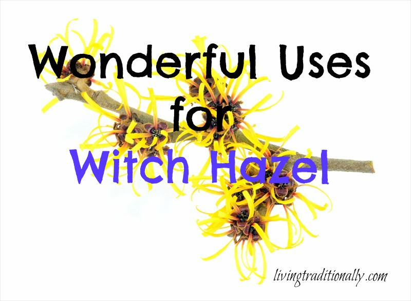 Wonderful Uses for Witch Hazel