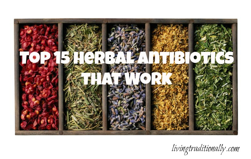 Top 15 Herbal Antibiotics that Work