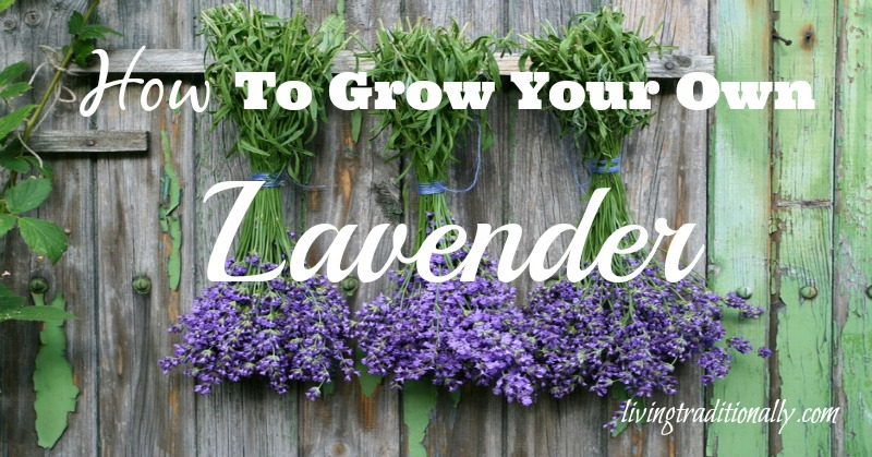 how to grow your own lavender. Black Bedroom Furniture Sets. Home Design Ideas
