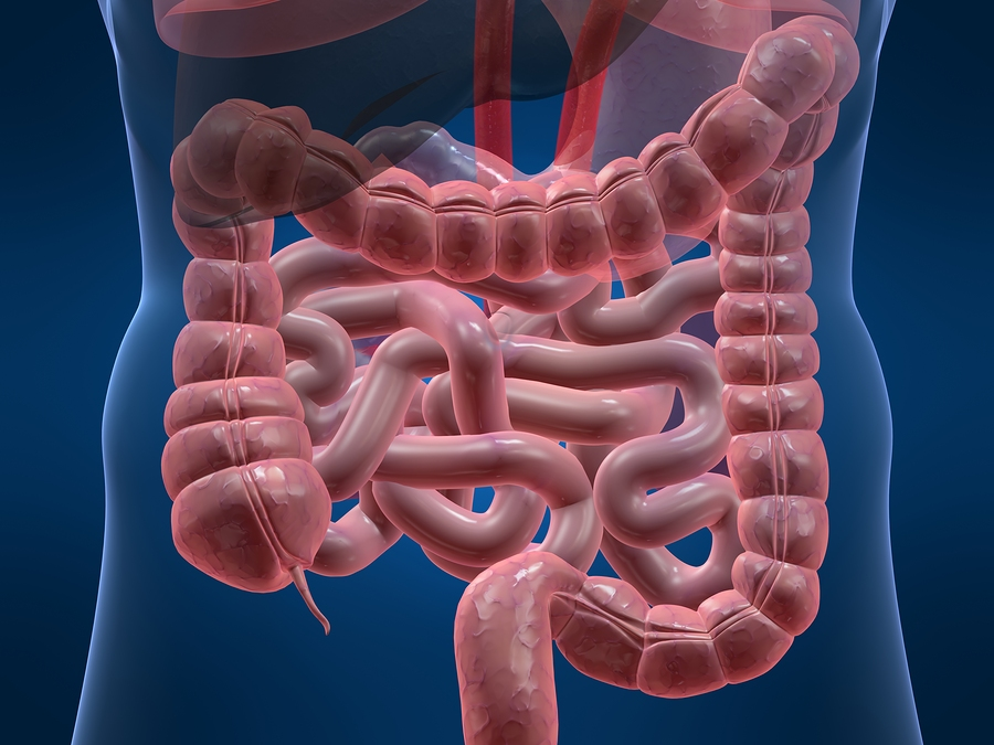 Appendix May Perform Useful Function, Researchers Say