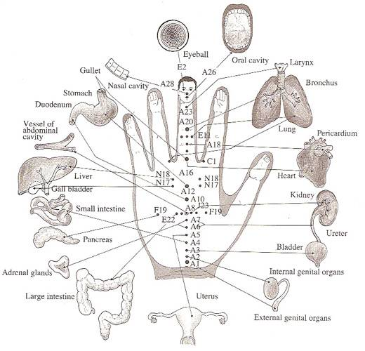each-finger-is-tied-to-two-organs-this-japanese-method-will-help-the-healing-in-a-few-minute