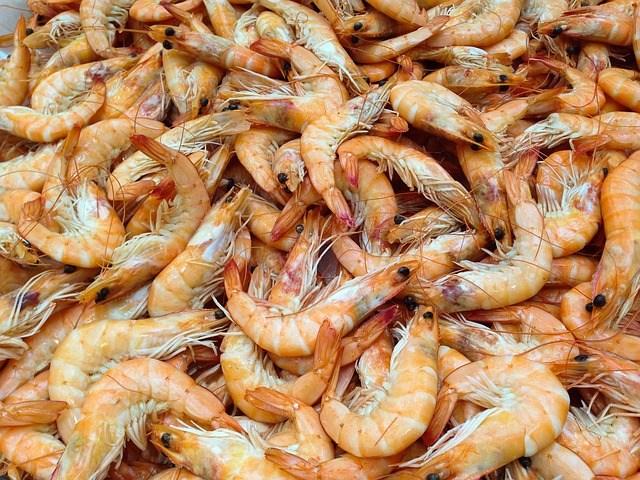 toxic shrimp