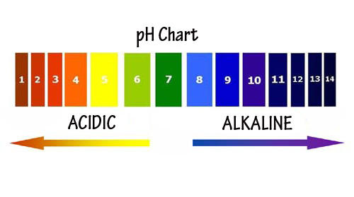 How To Check Your pH Balance