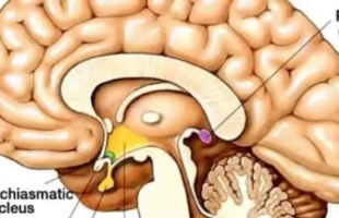 How to Decalcify Your Pineal Gland (And Why You Should)